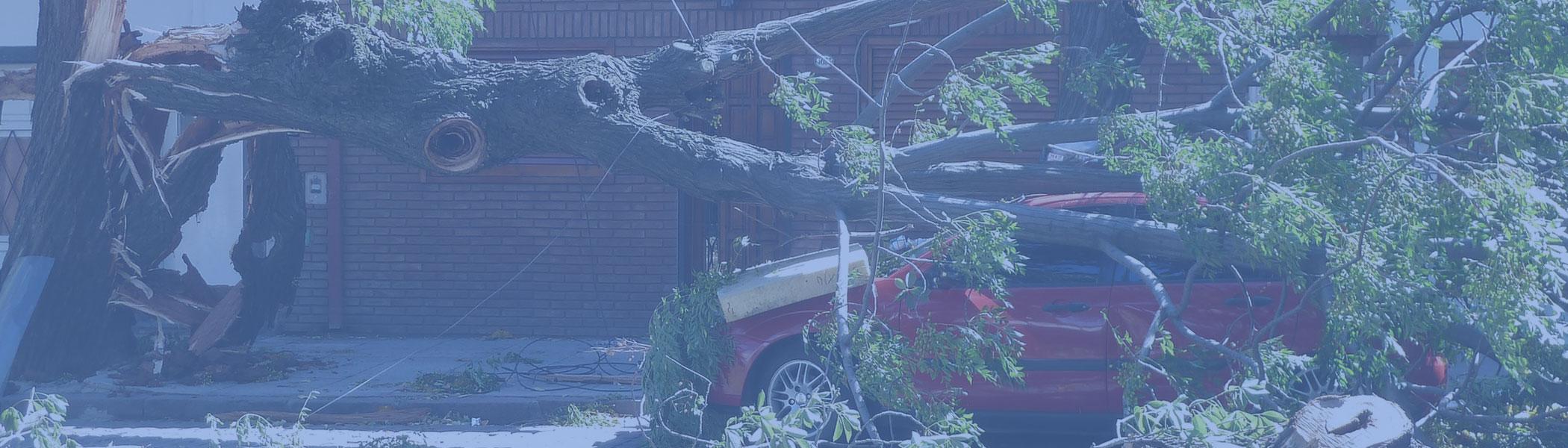 car crushed by tree limb