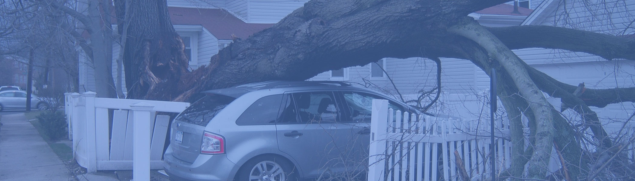 tree falls on car